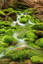 Mountain stream, mossy stones mural wallpaper thumbnail