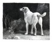 Dog, 1788 (engraving) mural wallpaper thumbnail