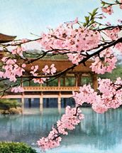 Lake With Cherry Blossoms And Shrine - Japan mural wallpaper thumbnail