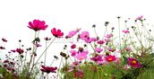 Wild Flowers wallpaper mural thumbnail