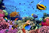 Coral Colony on a Reef wallpaper mural thumbnail