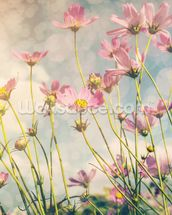 Cosmos Flower with Vintage Tones wallpaper mural thumbnail