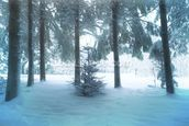 Winter Forest mural wallpaper thumbnail