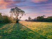 Tree at Dawn mural wallpaper thumbnail