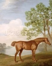 Pumpkin with a Stable-Lad, 1774 (oil on panel) wallpaper mural thumbnail