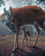 Mother and Fawn mural wallpaper thumbnail