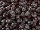 Blackberries wall mural thumbnail