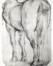 Horses Rear (pencil on paper) (b/w photo) wall mural thumbnail