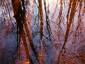 Caratunk Wildlife Refuge - Tree Reflections On Water wall mural thumbnail