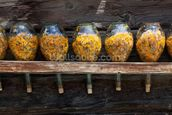 Dried Flowers mural wallpaper thumbnail