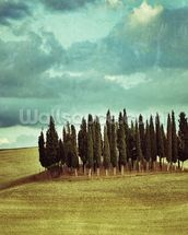 Cypress Trees on Tuscan Landscape wallpaper mural thumbnail