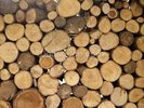 Stack of Logs wall mural thumbnail