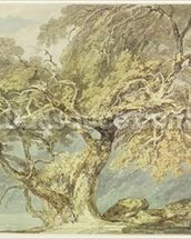 A Great Tree, c.1796 (w/c over graphite on paper) wallpaper mural thumbnail