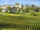Saint Emilion, Bordeaux Vineyards wall mural thumbnail