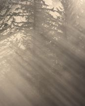 Morning Rays Shine Through the Mist wallpaper mural thumbnail