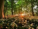 Sunlight Glow over Forest Flowers wall mural thumbnail