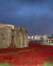 The Tower of London Poppies wallpaper mural thumbnail