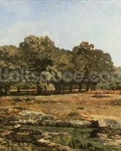 Avenue of Chestnut Trees at La Celle-Saint-Cloud, c.1866-67 (oil on canvas) wallpaper mural thumbnail
