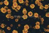 Dark Botanics Floral Wallpaper wall mural thumbnail