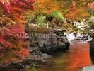 Autumn Colours, Japan wall mural thumbnail