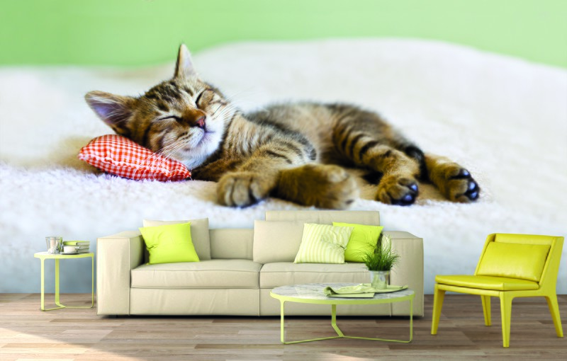 cat-wallpaper-gift-guide