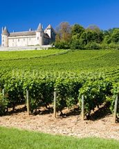 Burgundy, Chateau de Rully Vineyards mural wallpaper thumbnail