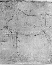 Study of a Horse (metal point on paper) (b/w photo) mural wallpaper thumbnail