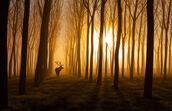 Forest Stag mural wallpaper thumbnail