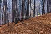 Homolje Mountains Autumn Woodland wall mural thumbnail
