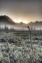 Morning Fog on the Copper River Highway wallpaper mural thumbnail