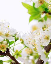 Plum Tree Flower wallpaper mural thumbnail
