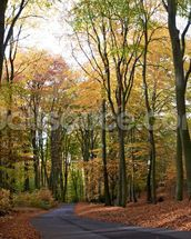 Colourful Autumn Woodland mural wallpaper thumbnail