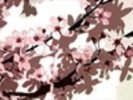 Japanese Blossom (colour photo) wall mural thumbnail