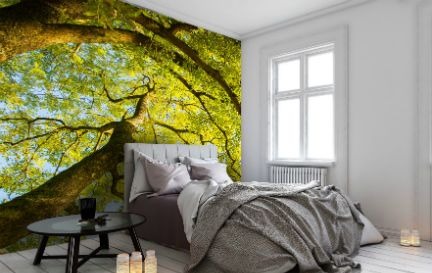 Phil McMenemy Photography Wallpaper Murals