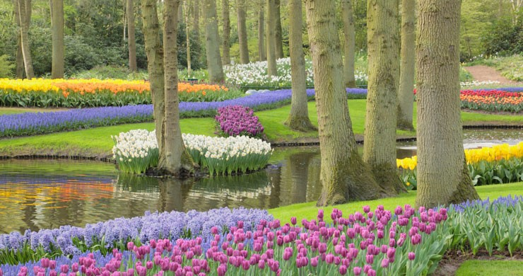 dutch tulip and flower garden wall mural