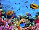 Coral Colony on a Reef wall mural thumbnail
