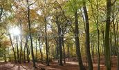 Autumn Woodland wall mural thumbnail