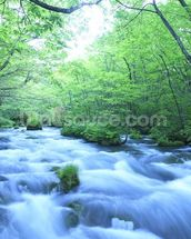 Spring Forest River mural wallpaper thumbnail