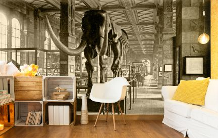 Natural History Museum Wall Murals Wallpaper