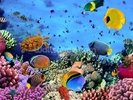Photo of a Coral Colony wall mural thumbnail