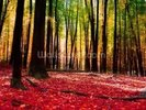 Colourful Autumn Forest wall mural thumbnail