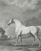 Mambrino, engraved by George Townley Stubbs (1756-1815) pub. 1794 (etching) wallpaper mural thumbnail