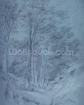 Study of ash and other trees (pencil on paper, heightened with white chalk) wall mural thumbnail