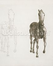 Tab. VIII, from The Anatomy of the Horse... 1766 (engraving) wallpaper mural thumbnail