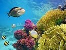 Coral Reef - Red Sea - Egypt wall mural thumbnail