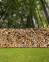 Pile of Chopped Firewood in the Woods wallpaper mural thumbnail