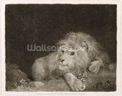 A Lion (A Recumbent Lion) engraved by the artist, pub. 1788 (etching) mural wallpaper thumbnail
