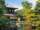 Japanese Garden Pavillion wall mural thumbnail