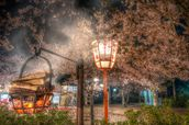 Burning Incense at the Kyoto Cherry Blossom Festival wallpaper mural thumbnail