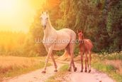 Sunlit Mare and foal wall mural thumbnail